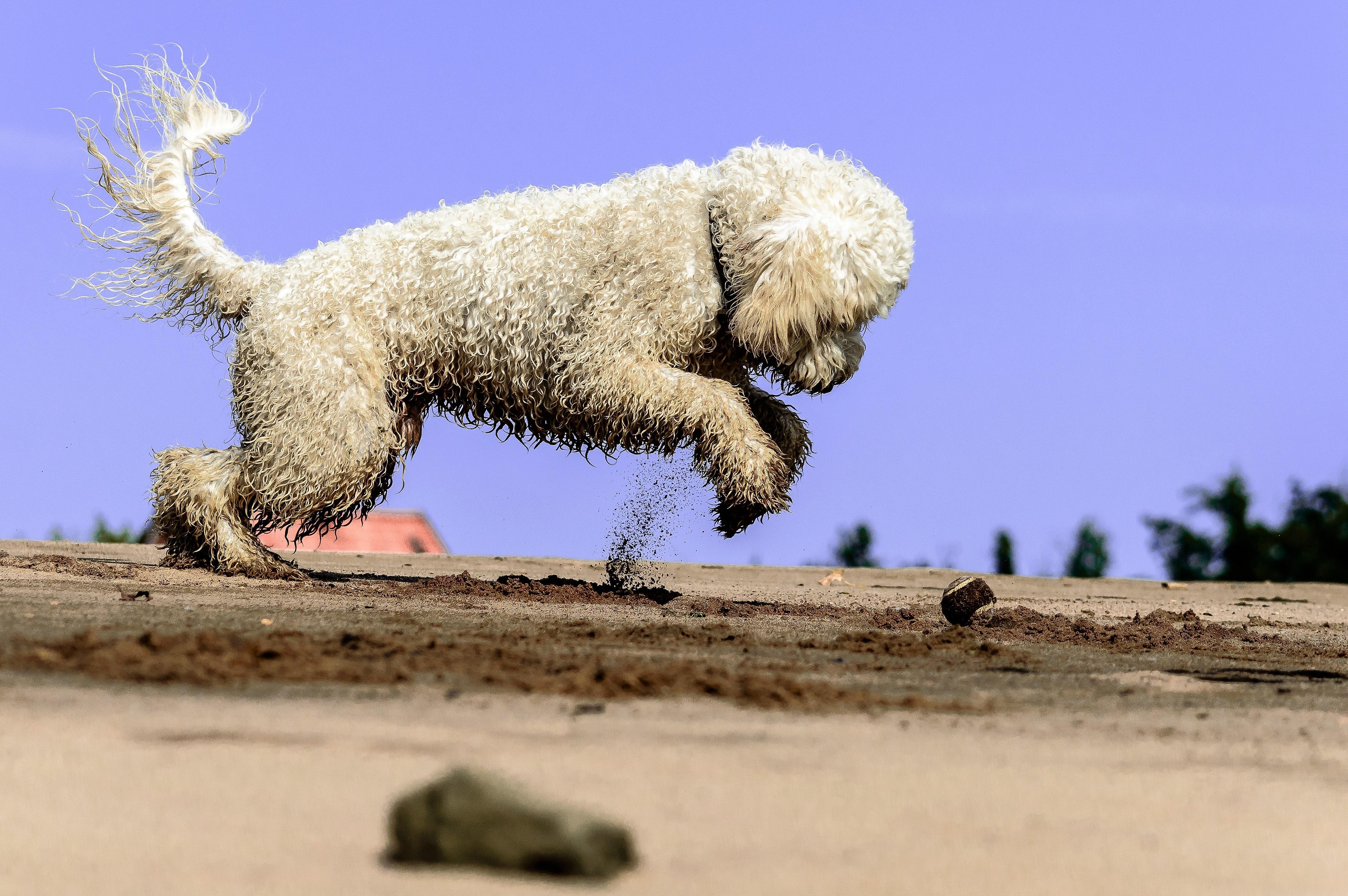 animal-ball-beach-210411